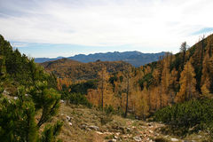 Triglav autumn larches Dolina Triglavskih Jezer Royalty Free Stock Photos