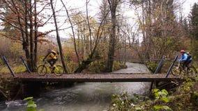Triglav slovenië De herfst Forest Bridge over rivier stock videobeelden