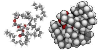 Triglyceride (animal fat) vector illustration
