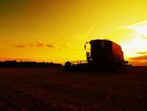 Trigo abandonado de la cosecha de la cosechadora en el medio de un campo de granja Campo de trigo amarillo de la mañana en el bac Imagenes de archivo