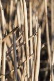 trigo após a colheita fotografia de stock