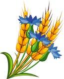 Trigo com cornflowers Fotografia de Stock