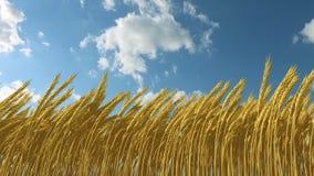 Trigo creciente contra el cielo stock de ilustración