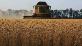 Trigo da colheita mecanizada vídeos de arquivo