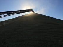 Trigo de colada del transportador del grano sobre una pila Imagenes de archivo