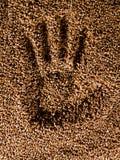 Trigo de Handprint Imagem de Stock