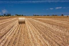 Trigo de la cosecha Fotos de archivo