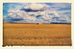 Trigo de la cosecha mecanizada Fotos de archivo libres de regalías
