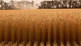 Trigo de la cosecha mecanizada en el campo metrajes