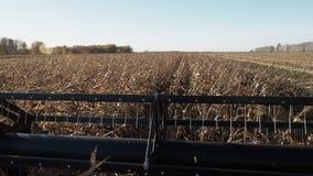 Trigo de oro de la cosecha mecanizada en el campo del otoño almacen de video