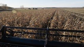 Trigo de oro de la cosecha mecanizada en el campo del otoño almacen de metraje de vídeo