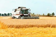 Trigo del corte de la cosechadora en el campo Tiempo de cosecha Fotografía de archivo