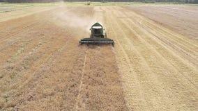 Trigo del otoño que cosecha la antena de la cosechadora de la máquina segador almacen de metraje de vídeo