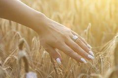 Trigo del tacto de la mano de la mujer Fotos de archivo