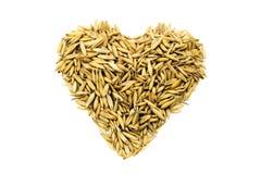 Trigo dourado das grões sob a forma de um coração Fotografia de Stock
