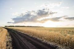 Trigo dourado das orelhas do campo de trigo Conceito rico da colheita imagem de stock