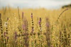 Trigo e flor imagens de stock