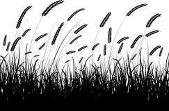 Trigo e hierba Imagen de archivo libre de regalías