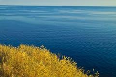 Trigo e oceano Imagens de Stock Royalty Free