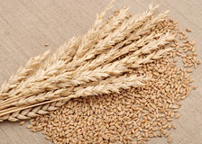 Trigo e wheat-ears Fotos de Stock Royalty Free