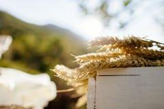 Trigo en la caja de madera blanca Fotografía de archivo libre de regalías