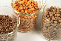 Trigo, maíz, grano de gérmenes de la soja Fotos de archivo libres de regalías