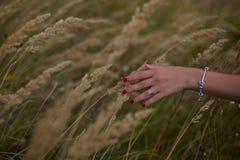 Trigo maduro de los oídos en manos de la mujer contra un fondo del campo de trigo fotografía de archivo libre de regalías