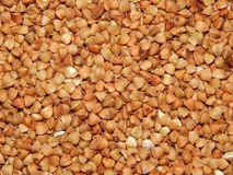 Trigo mourisco do fundo, trigo mourisco, grão do trigo mourisco Fotos de Stock Royalty Free