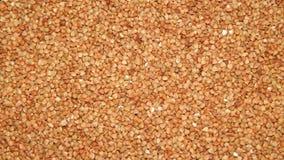 Trigo mourisco do fundo, trigo mourisco, grão do trigo mourisco Foto de Stock Royalty Free
