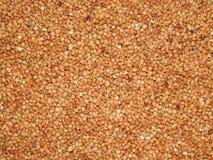 Trigo mourisco do fundo, trigo mourisco, grão do trigo mourisco Foto de Stock