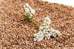 trigo mourisco e flor Fotografia de Stock Royalty Free