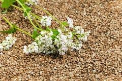 trigo mourisco e flor Imagens de Stock Royalty Free