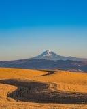 Trigo pronto para colher em Oregon central Fotos de Stock