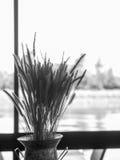 Trigo seco en cafetería de la orilla imagenes de archivo