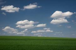 Trigo verde del campo con el cielo nublado azul Imagen de archivo