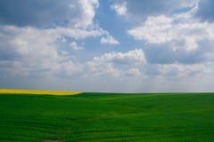Trigo y campo del canola Imagen de archivo