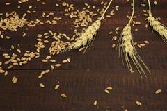 Trigo y cereales Imágenes de archivo libres de regalías