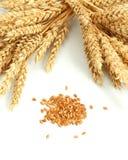 Trigo y grano Imagen de archivo libre de regalías