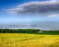 Trigo y maíz que crecen en granja Imágenes de archivo libres de regalías