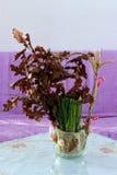 Trigo y registro de Yule verdes Foto de archivo