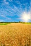 Trigo y sol maduros de oro, cielo azul con las nubes. imágenes de archivo libres de regalías