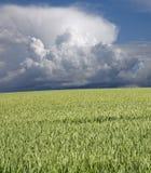 Trigo y stormclouds verdes imagen de archivo