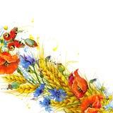 Trigo y wildflower Ilustración de la acuarela Foto de archivo libre de regalías