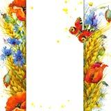 Trigo y wildflower Ilustración de la acuarela Fotos de archivo libres de regalías