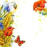 Trigo y wildflower Ilustración de la acuarela Imagenes de archivo