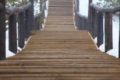A trilha é feita da madeira na floresta Imagens de Stock Royalty Free