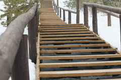 A trilha é feita da madeira na floresta Foto de Stock Royalty Free