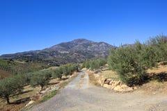 Trilha andaluza através dos bosques verde-oliva às montanhas Fotografia de Stock Royalty Free