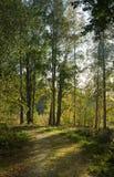 Trilha através da floresta Fotografia de Stock