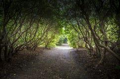 Trilha completamente e avenida das árvores fotos de stock